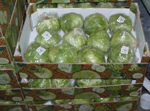 Особенности хранения капусты в пищевой пленке в погребе