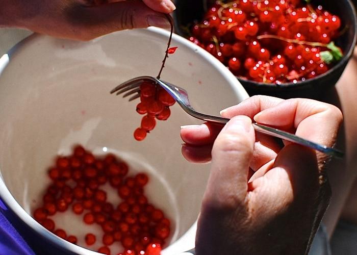 Когда собирать красную смородину и как сделать это быстро