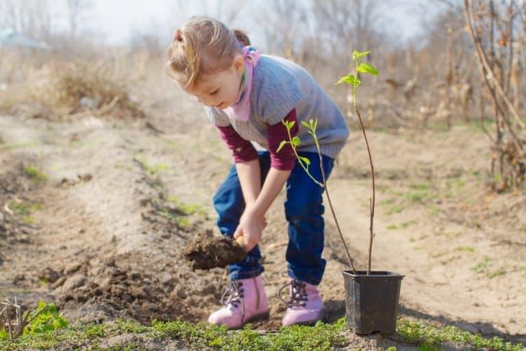 Руководство по посадке миндаля осенью для начинающих садоводов