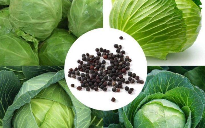 Как получить капустные семена