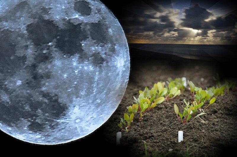 Когда убирать капусту с огорода на хранение на зиму по лунному календарю 2020