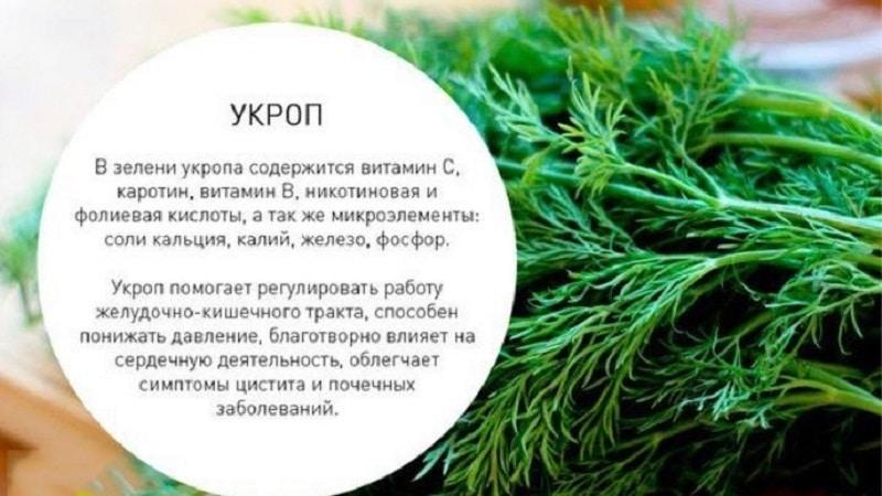 Какие витамины содержатся в укропе - химический состав и полезные свойства растения