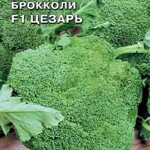 лучшие сорта брокколи для средней полосы