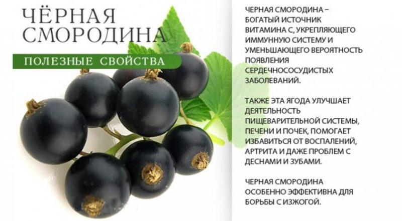 черная смородина полезные свойства для женщин