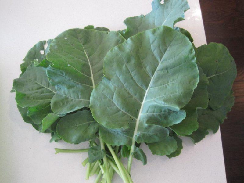 съедобны ли листья брокколи